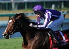 Last year's Breeders' Cup Turf winner, St Nicholas Abbey, is back again in 2012.