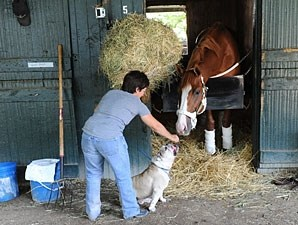 Shackleford - Saratoga August 2, 2012.