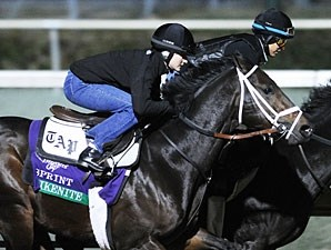 Akenite, Breeders' Cup 2011