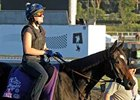 Visit, in the Filly and Mare Turf, is one of Steve Haskin's longshot plays for Oct. 24.