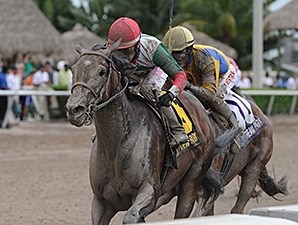 Little Alexis wins the 2014 Cash Run Stakes.