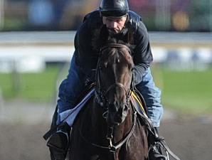 Dark Cloud Dancer at Woodbine on July 1, 2010.
