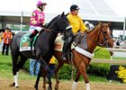 "Mylute<br><a target=""blank"" href=""http://photos.bloodhorse.com/TripleCrown/2013-Triple-Crown/Preakness-Stakes-138/29423277_98XmS6#!i=2528664880&k=3TBFqVd"">Order This Photo</a>"