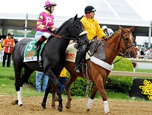 Mylute in the post parade for the 2013 Preakness.
