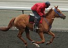 Awesome Fire will be ridden by Chantal Sutherland in the Wonder Where Stakes at Woodbine.