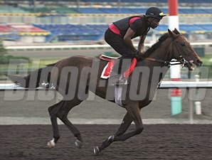 Making Amends - Woodbine June 19, 2012.