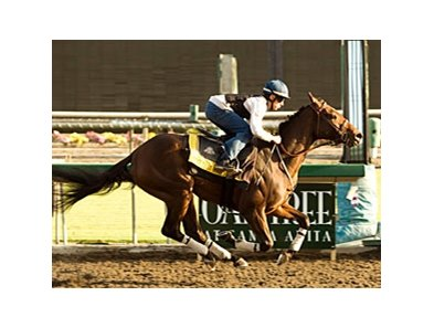 Mine That Bird works at Santa Anita on October 6 with Joe Talamo aboard.