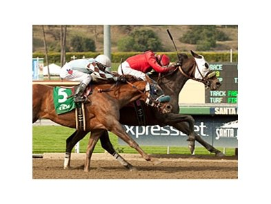Dynamic Host holds off Dhaamer to win the Tokyo City Cup at Santa Anita Park.