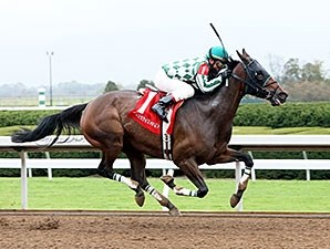 Honey Lake - Allowance Win, October 15, 2014.