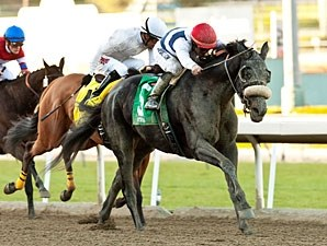 Eblouissante Allowance Win, January 17, 2013.