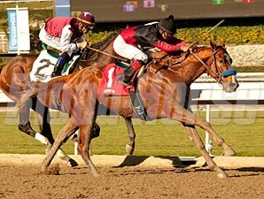 Curly Top Maiden Win January 18, 2013