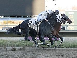 Adirondack King Horse Profile Bloodhorse