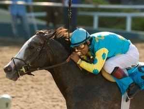 Triple Bend: Zensational Baffert's New Beast