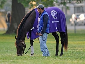Sabercat - Churchill Downs, April 30, 2012,