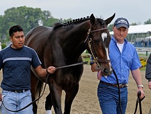 Rachel Alexandra at Pimlico, May 14, 2009.
