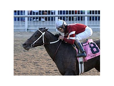 "Steve Asmussen will send out Pyro (shown) and J Be K in the Louisiana Derby.<br><a target=""blank"" href=""http://www.bloodhorse.com/horse-racing/photo-store?ref=http%3A%2F%2Fpictopia.com%2Fperl%2Fgal%3Fprovider_id%3D368%26ptp_photo_id%3D3542585%26ref%3Dstory"">Order This Photo</a>"
