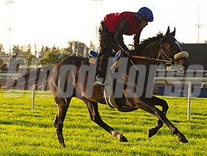 Lucayan works at Woodbine 10/25/2013.