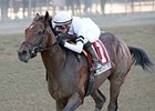 "In Trouble<br><a target=""blank"" href=""http://photos.bloodhorse.com/AtTheRaces-1/at-the-races-2013/27257665_QgCqdh#!i=2807792489&k=S7WjNxB"">Order This Photo</a>"
