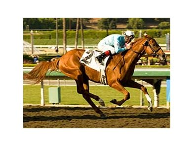 "Casino Drive won his BC Classic prep at Santa Anita Oct. 12. <br><a target=""blank"" href=""http://www.bloodhorse.com/horse-racing/photo-store?ref=http%3A%2F%2Fpictopia.com%2Fperl%2Fgal%3Fprovider_id%3D368%26ptp_photo_id%3D6294744%0D%0A%26ref%3Dstory"">Order This Photo</a>"