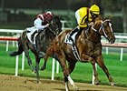 Curlin cruised to an easy win at Nad al Sheba Feb. 28, prepping for the Dubai World Cup (gr.I) March 29.