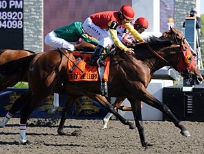 Eye of the Leopard Favored in Prince of Wales
