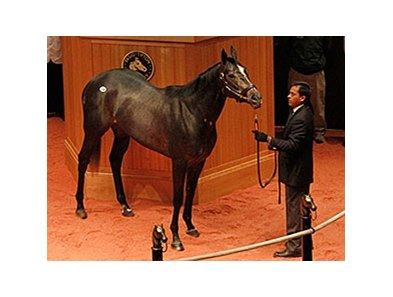 Mizdirection, hip 104, sold for $2.7 million dollars.