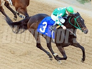 All About Allie wins the 2011 Downthedustryroad Breeders' Stakes.