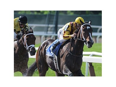 Rachel Alexandra has been installed as the 4-5 favorite for the Haskell Invitational.