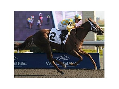 Northern Passion finished 2nd in the Woodbine Oaks.