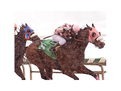 Greenspring made it a perfect 3-for-3 at Laurel Park after winning the General George Handicap in track record time despite a driving snowstorm.