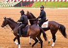 Orb gets acquainted with the Pimlico track on Wednesday.