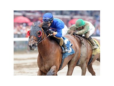 "Saginaw won the John Morrissey Aug 1, his fifth straight win.<br><a target=""blank"" href=""http://photos.bloodhorse.com/AtTheRaces-1/at-the-races-2013/27257665_QgCqdh#!i=2671800061&k=pN8pVm9"">Order This Photo</a>"