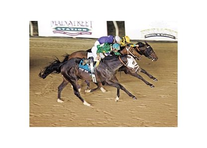 Turf War, dead-heat winner of the Delta Jackpot, could be entered in the WinStar Derby.