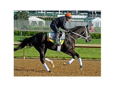 "Black Onyx<br><a target=""blank"" href=""http://photos.bloodhorse.com/TripleCrown/2013-Triple-Crown/Kentucky-Derby-Workouts/29026796_jvcnn8#!i=2485749098&k=5W9rPL5"">Order This Photo</a>"