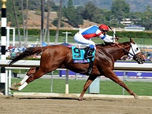 Champion Groupie Doll to Contest Gardenia