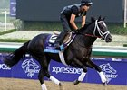 "Shanghai Bobby<br><a target=""blank"" href=""http://photos.bloodhorse.com/BreedersCup/2012-Breeders-Cup/Works/26130247_gxH6nS#!i=2188894445&k=mbHKZBV"">Order This Photo</a>"