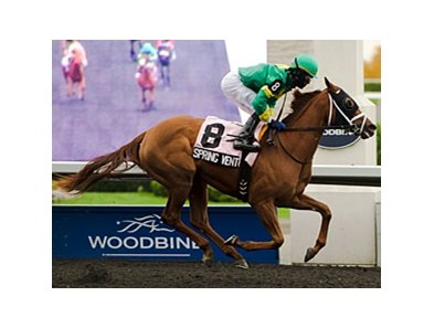 Spring Venture is in control in the Mazarine Stakes at Woodbine.