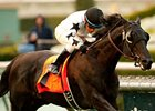 Slim Shadey won the 2012 San Marcos Stakes.