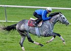 Turallure working at Keeneland 10/24/2011