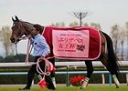 Lachesis wins the Queen Elizabeth II Satkes in Japan.