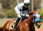 Dhaamer won the 2012 Sunset Handicap by 3 1/4 lengths.