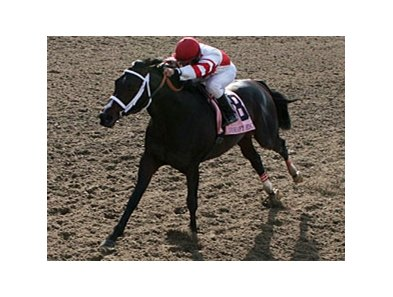 Honest Man tuned up for the N.O. Handicap with a win in the Mineshaft.