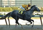 "Elusive Lady in the 2007 Tempted (gr. III) at Aqueduct. <br><a target=""blank"" href=""http://www.bloodhorse.com/horse-racing/photo-store?ref=http%3A%2F%2Fpictopia.com%2Fperl%2Fgal%3Fprovider_id%3D368%26ptp_photo_id%3D3852746%26ref%3Dstory"">Order This Photo</a>"