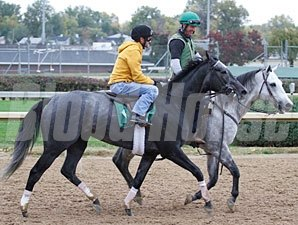 Unrivaled Belle works towards the Breeders' Cup Oct. 25, 2010.