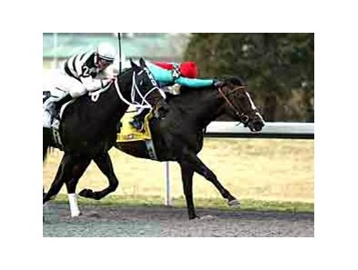 Battaglia Memorial Stakes winner State of Play is expected to be in the Vinery Racing Spiral Stakes.