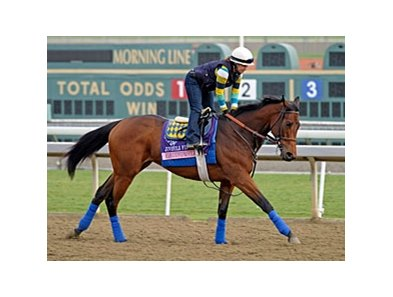 "Executiveprivilege preps for the Breeders' Cup at Santa Anita.<br><a target=""blank"" href=""http://photos.bloodhorse.com/BreedersCup/2012-Breeders-Cup/Works/26130247_gxH6nS#!i=2189108879&k=FTFDBqx"">Order This Photo</a>"
