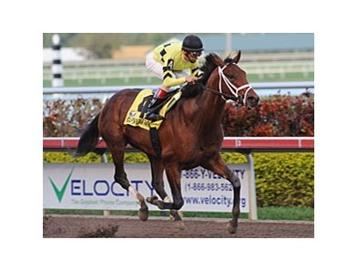 "Quality Road won the Donn on February 6. <br><a target=""blank"" href=""http://www.bloodhorse.com/horse-racing/photo-store?ref=http%3A%2F%2Fpictopia.com%2Fperl%2Fgal%3Fprovider_id%3D368%26ptp_photo_id%3D8781830%26ref%3Dstory"">Order This Photo</a>"
