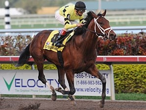 Quality Road wins the 2010 Donn.
