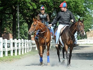 Animal Kingdom at Belmont on June 5, 2011.