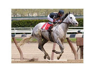 "Harlem Rocker, the highly-touted son of Macho Uno, will go in the June 1 Plate Trial at Woodbine.<br><a target=""blank"" href=""http://www.bloodhorse.com/horse-racing/photo-store?ref=http%3A%2F%2Fpictopia.com%2Fperl%2Fgal%3Fprovider_id%3D368%26ptp_photo_id%3D4304424%0D%0A%26ref%3Dstory"">Order This Photo</a>"